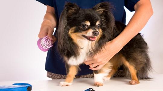 Grooming-Dog2
