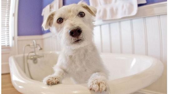 dog-grooming2